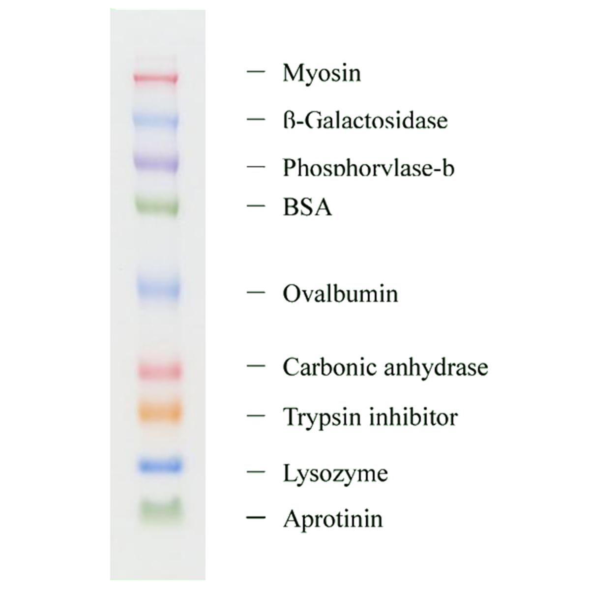 Multi-Color Protein Size Marker by Diagnocine